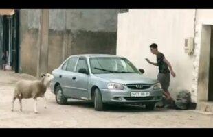 جديد فيديوهات الضحك 2020 فيديوهات مغربية مضحكة #6